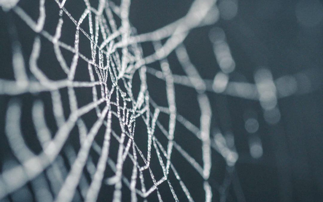 Seda de araña, el material del futuro.